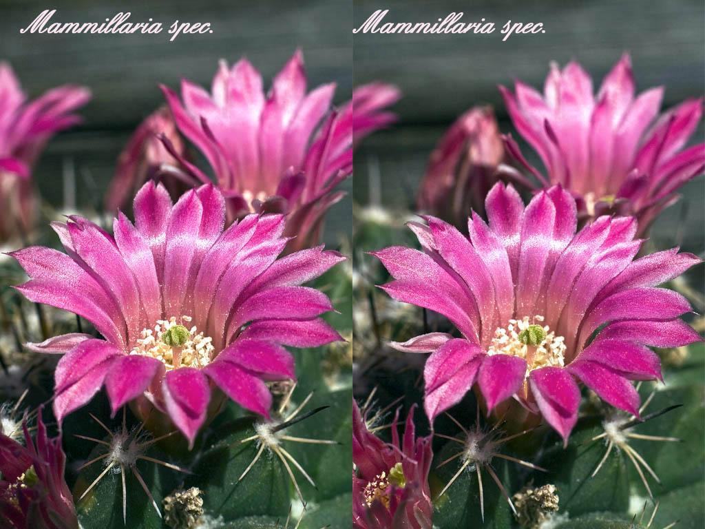 Цветок строманта  основные принципы ухода за растением в